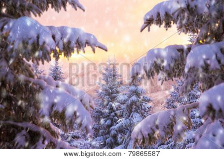 Beautiful winter nature, majestic view on mountainous landscape through fir tree branch covered with white snow in mild yellow sunset, wintertime fairytale