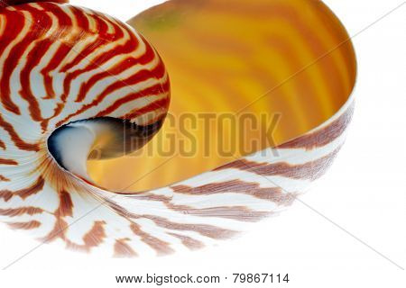 nautilus shell section isolated on white background