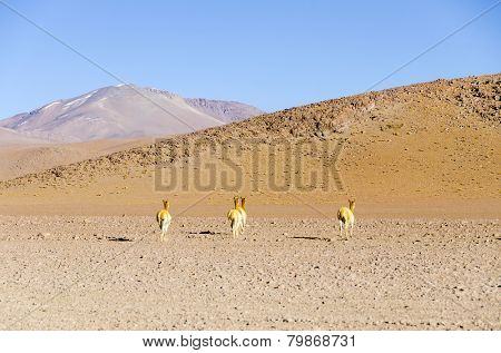 Bolivia, Antiplano, Los Lipez - multicolor mountains and vicunas