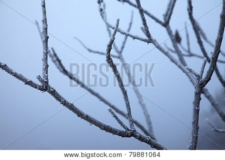 Winter tree detail with frost