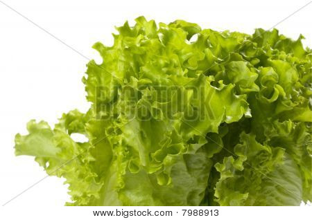 Lettuce Bunch Background
