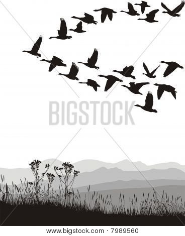 Migrating Geese In The Spring And Autumn.eps