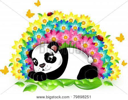 Panda With Rainbow