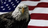 image of eagles  - Oil painting of a majestic Bald Eagle against a photo of an American Flag - JPG