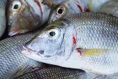 pic of sea fish  - Background of sea fish head on fish market in Vietnam - JPG