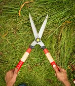picture of manicured lawn  - person cutting grass by grass shear on Grass background - JPG