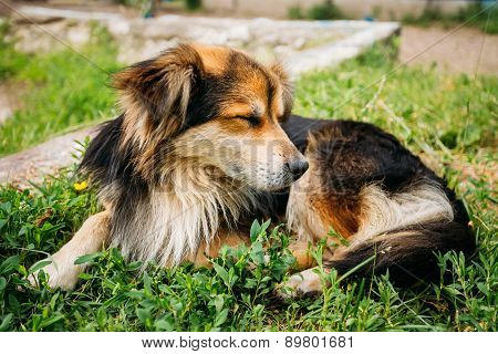 Mixed Breed Small Size Black And Brown Colors Dog Close Portrait