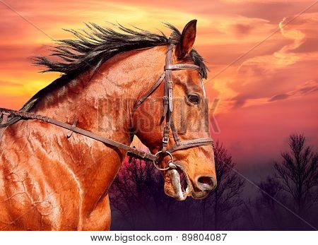 Portrait Of Bay Horse On The Run Against The Sunset