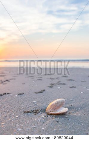 Shell on the beach. Hua-hin, Thailand