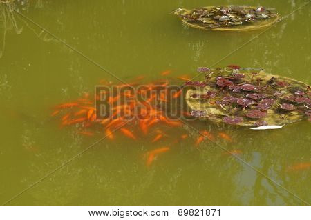small fishes in a reservoir