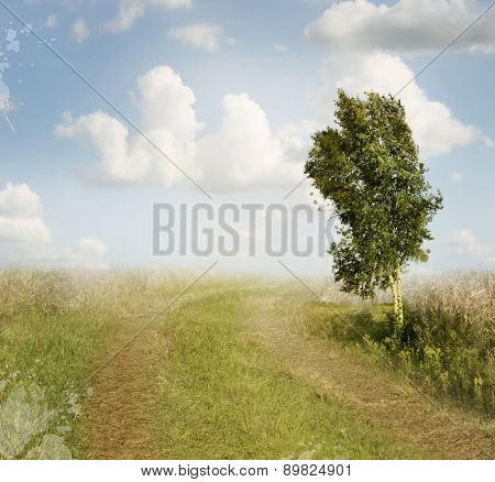 Summer Landscape With Rural Road And A Birch Tree