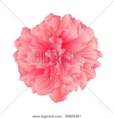 Pink  Flower Sakura Flower Vector