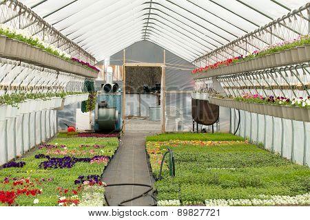 Nursery Greenhouse Interior