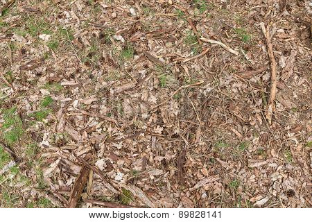 Background Of Forest Floor With Wood Chips, Sprigs, Leafs, Grass And Pine Cones