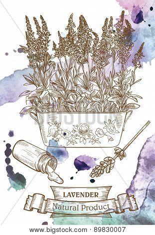 Vector sketch of detailed lavender