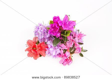 Rhododendron flowers composition