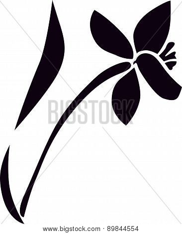 Bouquet of narcissus. Silhouette image of flowers.