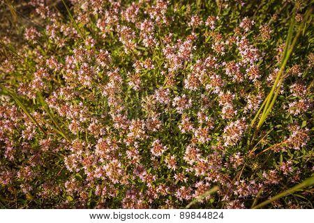 Image Of Beautiful Spring Flowers