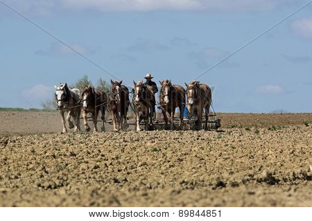 Amish Cultivating the Earth