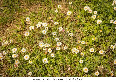 Spring Flowers On Mount Olympus, Central Greece