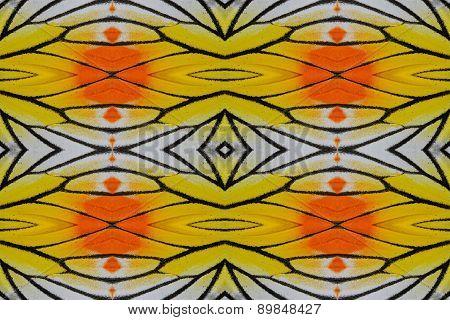Painted Jezebel Butterfly (delias Hyparete)