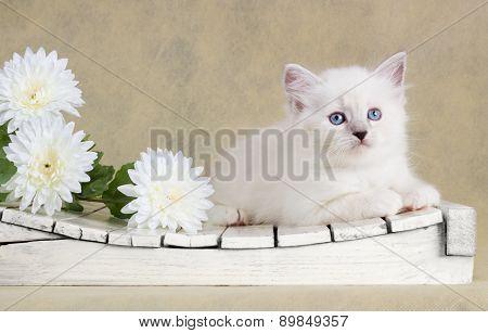 Neva Masquerade Kitten With Flowers