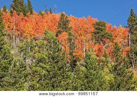 Colorado Mountain Scenic in Fall