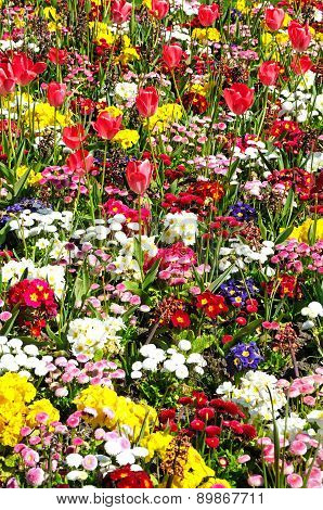 Pretty Spring flowerbed.