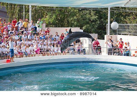 Show At The Dolphinarium