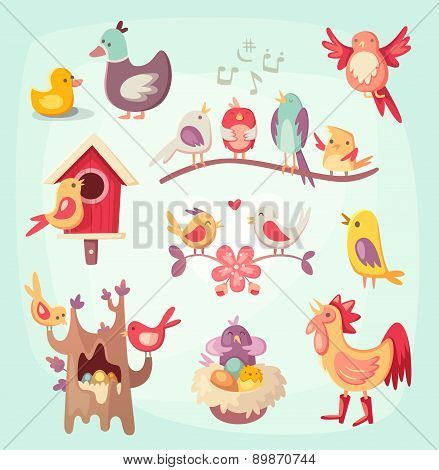 Set of colorful spring birds