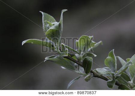 Deciduous tree twig