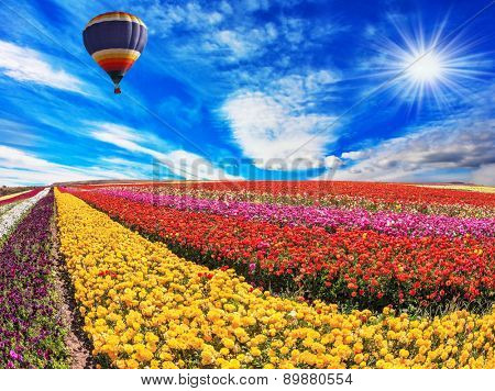 Elegant multi-color rural fields with flowers. Over the field in sky flying big balloon