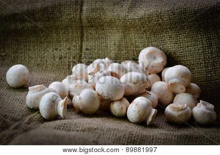 Mushrooms On A Hessian Background