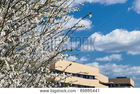 Blooming tree and a fragment of modern architecture