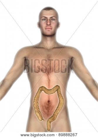 3D render of a male figure with internal organs exposed