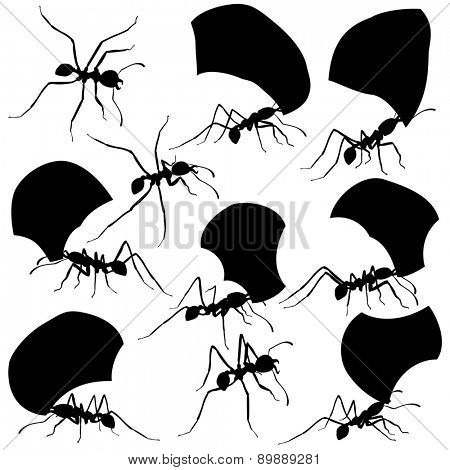 Set of illustrated silhouettes of leaf cutter ants