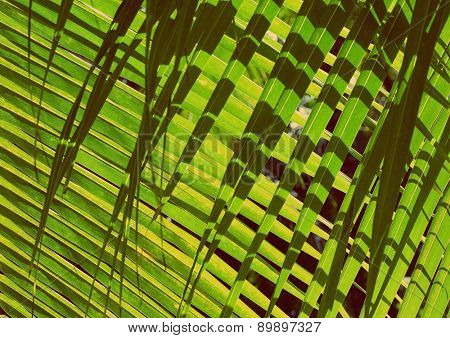 Palm leaves closeup background with shadow - vintage retro style