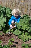 stock photo of strawberry blonde  - Blonde haired boy digging in the garden on sunny day - JPG