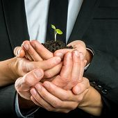 picture of grown up  - Cupped hands of different business people united to protect a green fragile sprout grown in fertile soil concept of ecology and business start up - JPG