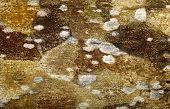 stock photo of fungus  - fungus texture - JPG