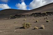 pic of canary-islands  - wild volcanic landscape at Timanfaya National Park Lanzarote Island Canary Islands Spain - JPG