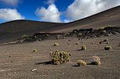 stock photo of volcanic  - wild volcanic landscape at Timanfaya National Park Lanzarote Island Canary Islands Spain - JPG