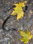 pic of snake-head  - Grass - JPG