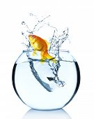 image of goldfish  - Goldfish jumping from glass aquarium - JPG