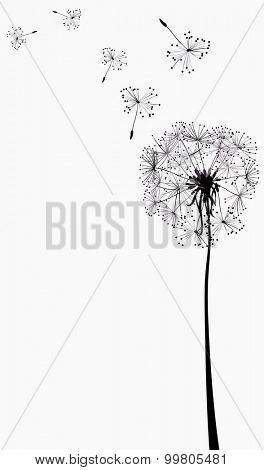 dandelion silhouette in the wind