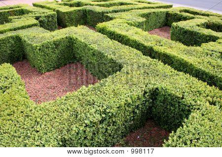 Mini Hedge Maze