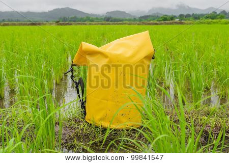 Yellow dry bag  put on Wet Paddy rice farmland