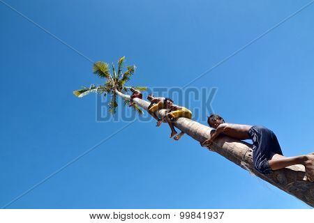 Bajau Laut Kids climbing the tree Maiga Island On June 7, 2014