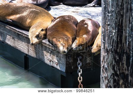 Sea lions on the platform, San Francisco
