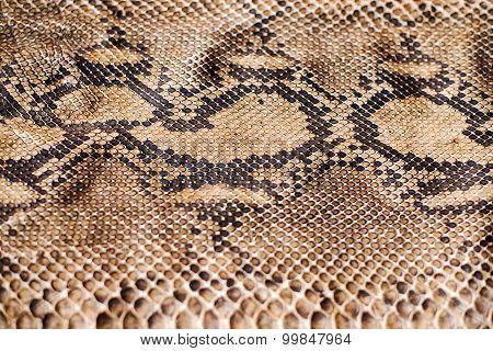 Python Snake Skin Pattern